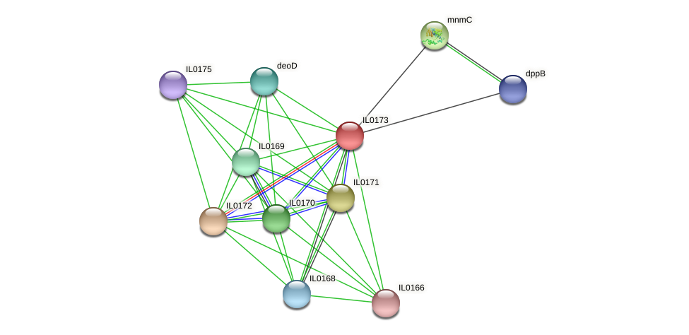 IL0173 protein (Idiomarina loihiensis) - STRING interaction network