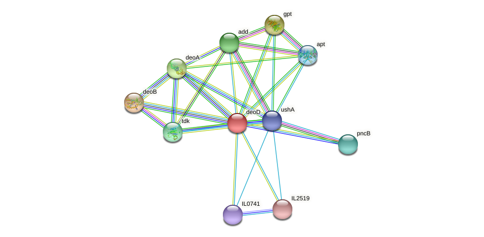 deoD protein (Idiomarina loihiensis) - STRING interaction network