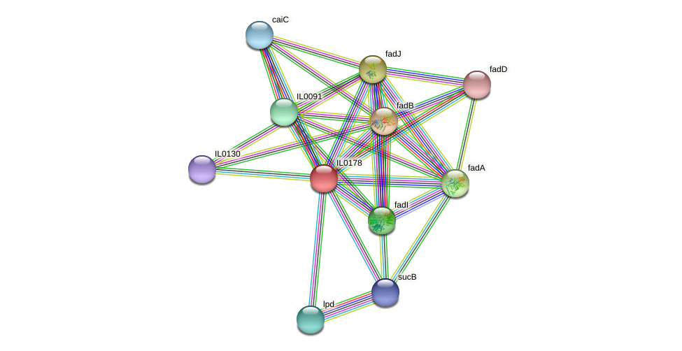 IL0178 protein (Idiomarina loihiensis) - STRING interaction network