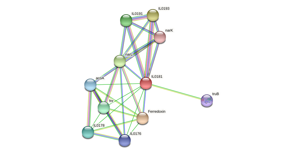 IL0181 protein (Idiomarina loihiensis) - STRING interaction network