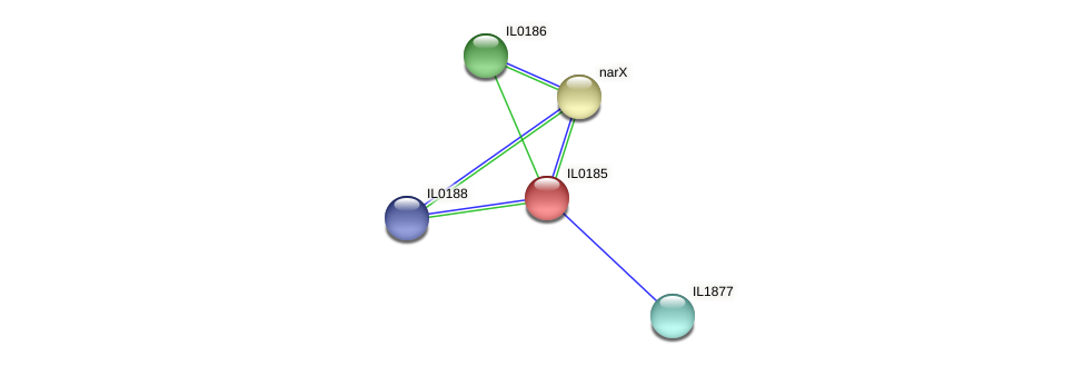 IL0185 protein (Idiomarina loihiensis) - STRING interaction network