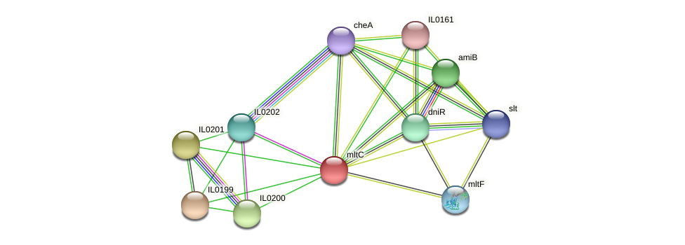 mltC protein (Idiomarina loihiensis) - STRING interaction network