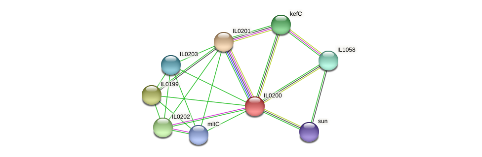 IL0200 protein (Idiomarina loihiensis) - STRING interaction network