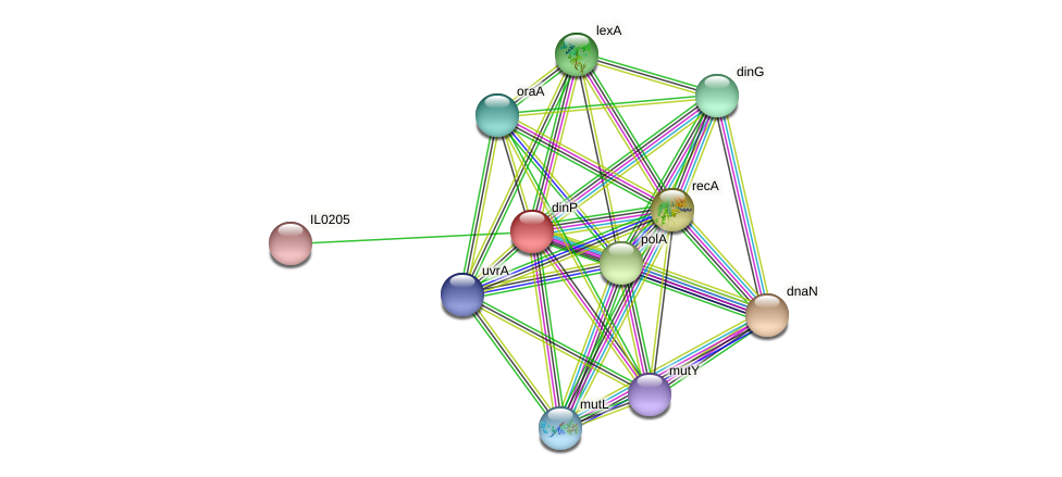 dinB protein (Idiomarina loihiensis) - STRING interaction network