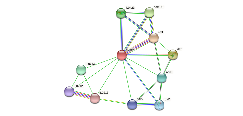 comM protein (Idiomarina loihiensis) - STRING interaction network