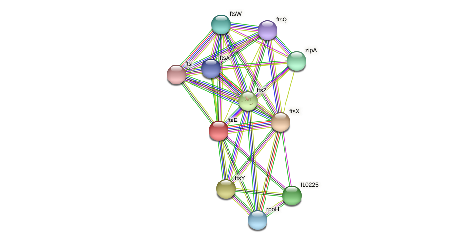 ftsE protein (Idiomarina loihiensis) - STRING interaction network
