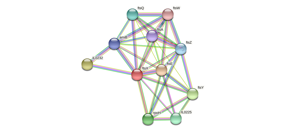 ftsX protein (Idiomarina loihiensis) - STRING interaction network