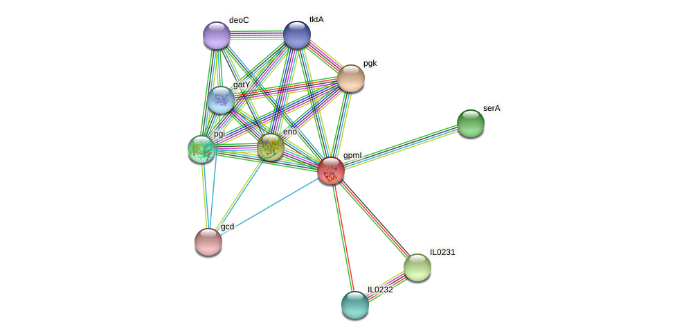 gpmI protein (Idiomarina loihiensis) - STRING interaction network
