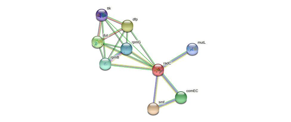 IL0240 protein (Idiomarina loihiensis) - STRING interaction network