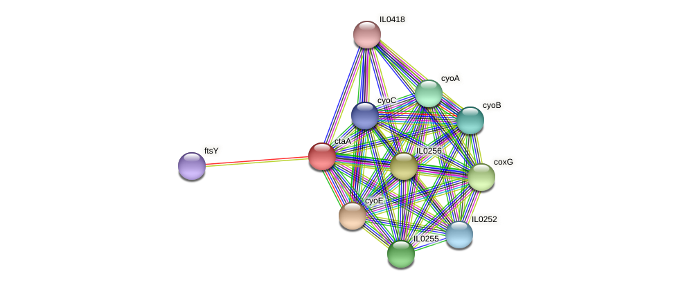 ctaA protein (Idiomarina loihiensis) - STRING interaction network