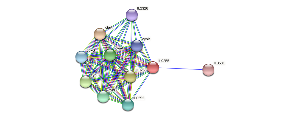 IL0255 protein (Idiomarina loihiensis) - STRING interaction network