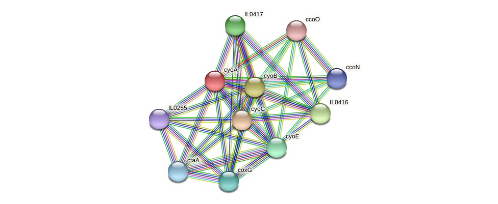cyoA protein (Idiomarina loihiensis) - STRING interaction network