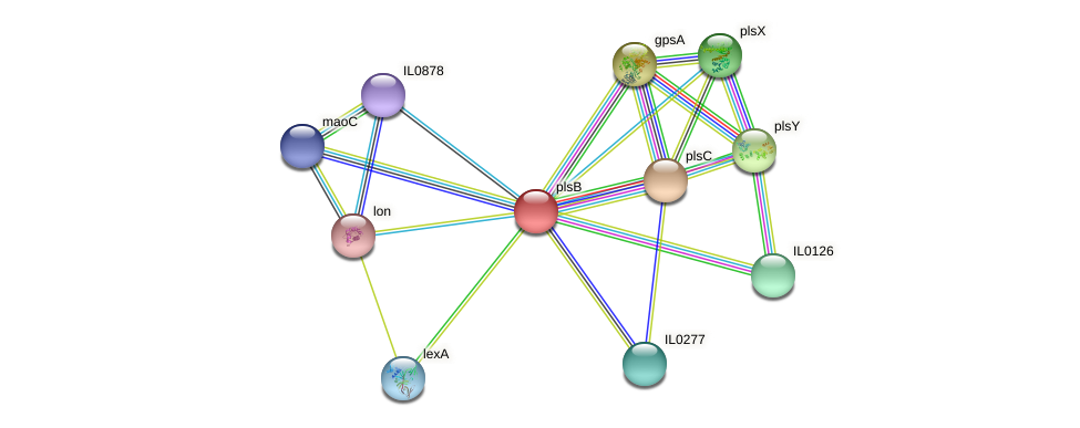 plsB protein (Idiomarina loihiensis) - STRING interaction network