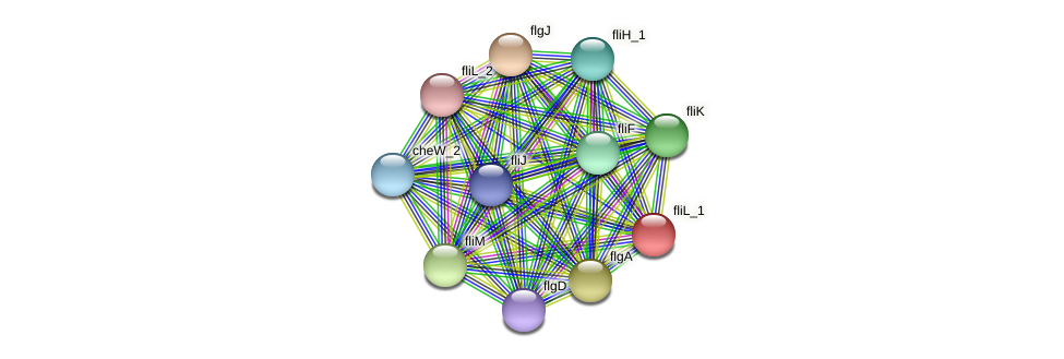 IL0266 protein (Idiomarina loihiensis) - STRING interaction network