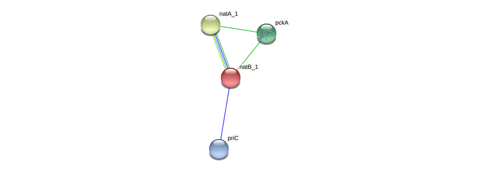 IL0275 protein (Idiomarina loihiensis) - STRING interaction network