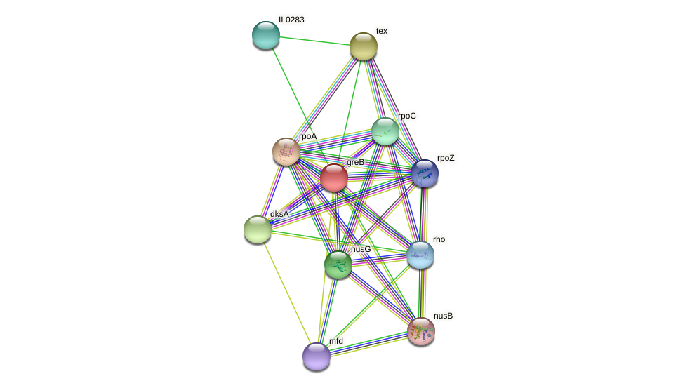 greB protein (Idiomarina loihiensis) - STRING interaction network