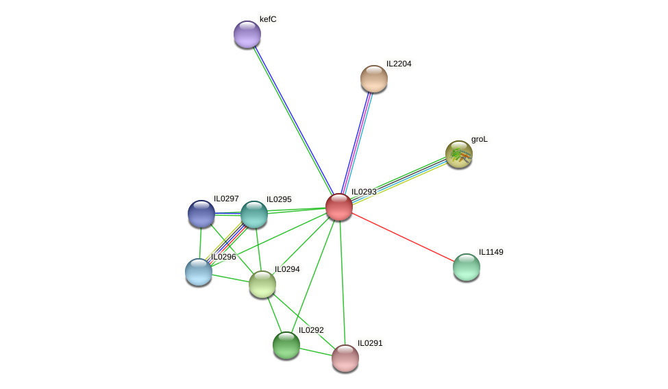 IL0293 protein (Idiomarina loihiensis) - STRING interaction network