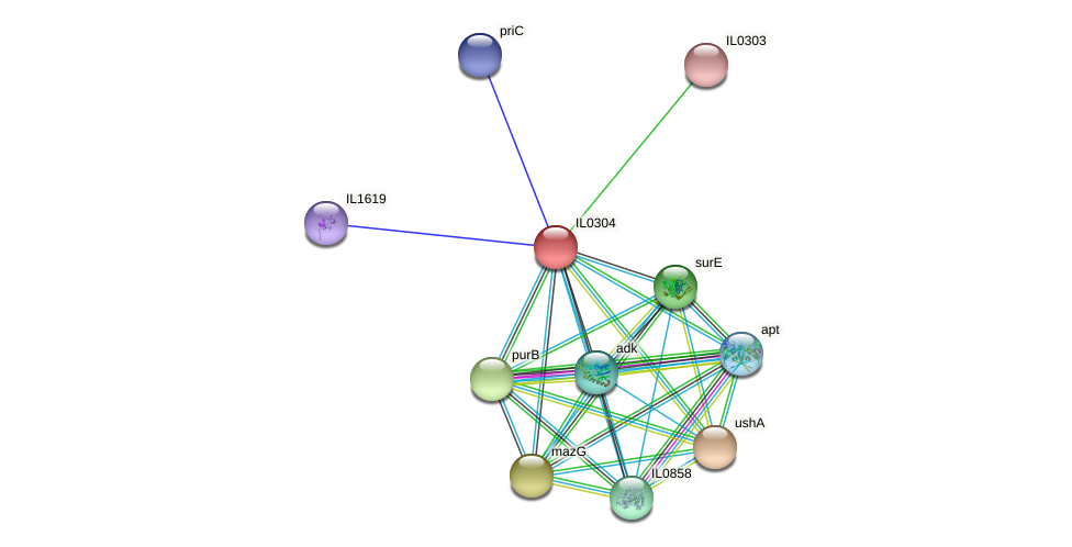 IL0304 protein (Idiomarina loihiensis) - STRING interaction network
