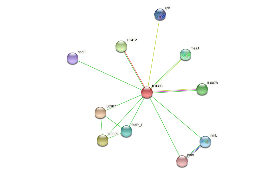 IL0308 protein (Idiomarina loihiensis) - STRING interaction network