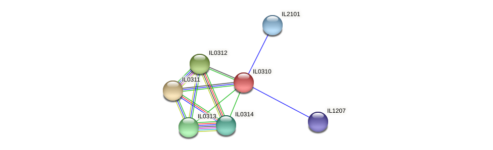 IL0310 protein (Idiomarina loihiensis) - STRING interaction network