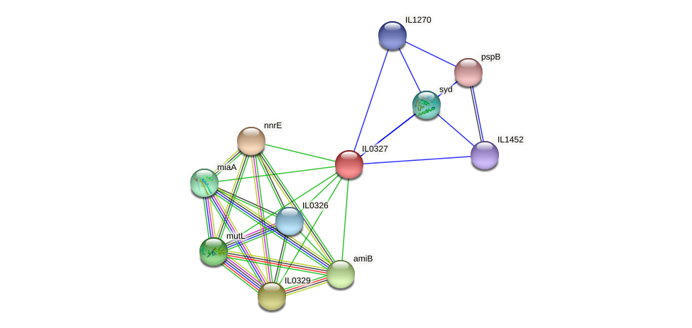 IL0327 protein (Idiomarina loihiensis) - STRING interaction network