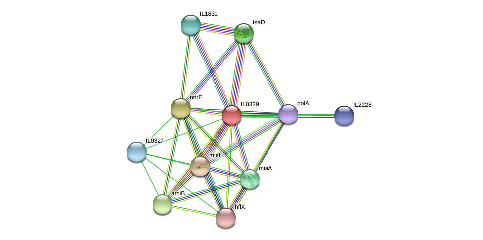 IL0329 protein (Idiomarina loihiensis) - STRING interaction network