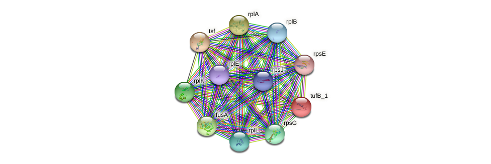IL0338 protein (Idiomarina loihiensis) - STRING interaction network