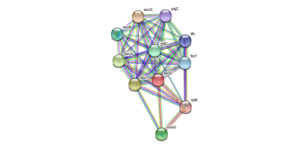 secE protein (Idiomarina loihiensis) - STRING interaction network