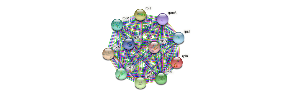 rplK protein (Idiomarina loihiensis) - STRING interaction network