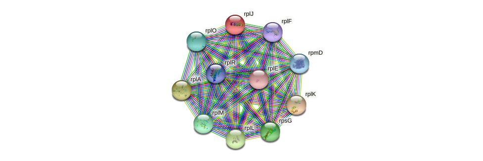 rplJ protein (Idiomarina loihiensis) - STRING interaction network