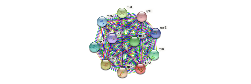 fusA protein (Idiomarina loihiensis) - STRING interaction network