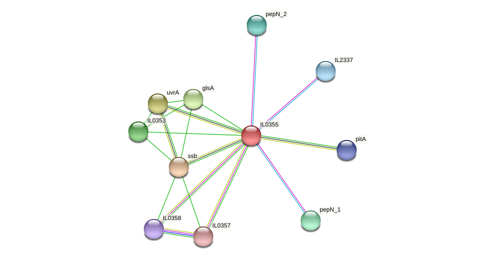 IL0355 protein (Idiomarina loihiensis) - STRING interaction network