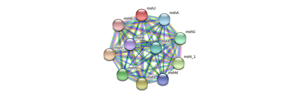mshJ protein (Idiomarina loihiensis) - STRING interaction network