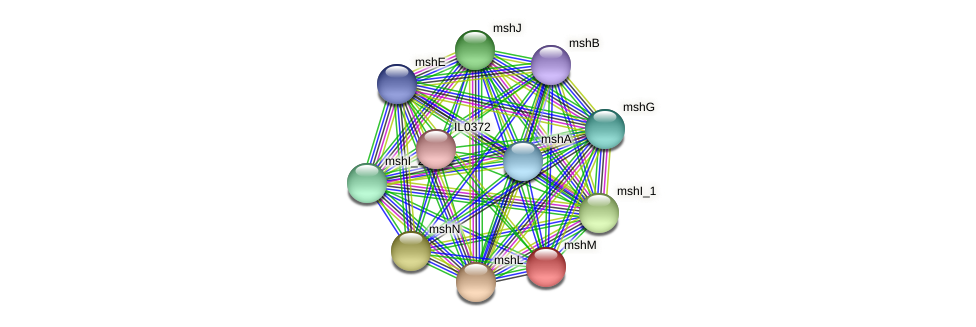 mshM protein (Idiomarina loihiensis) - STRING interaction network