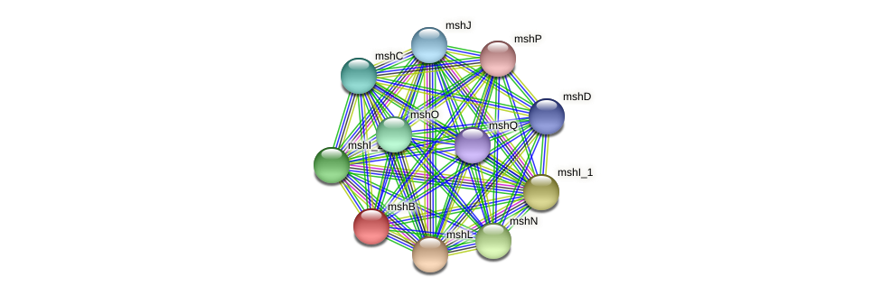 mshB protein (Idiomarina loihiensis) - STRING interaction network