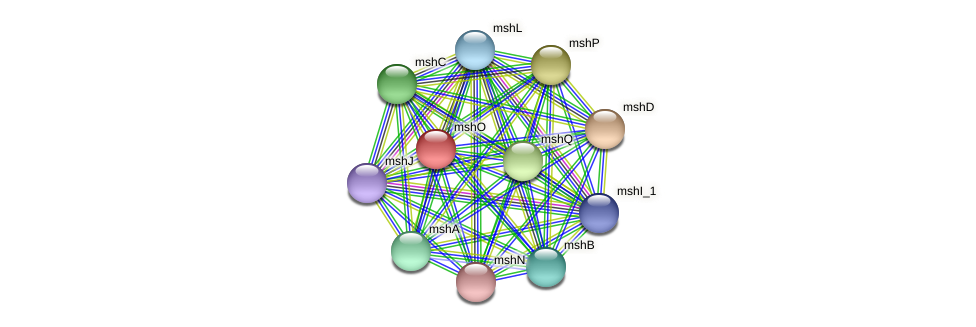 mshO protein (Idiomarina loihiensis) - STRING interaction network