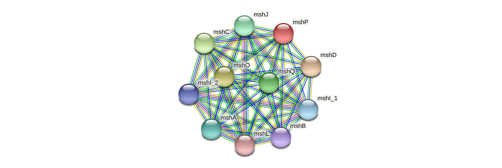 mshP protein (Idiomarina loihiensis) - STRING interaction network