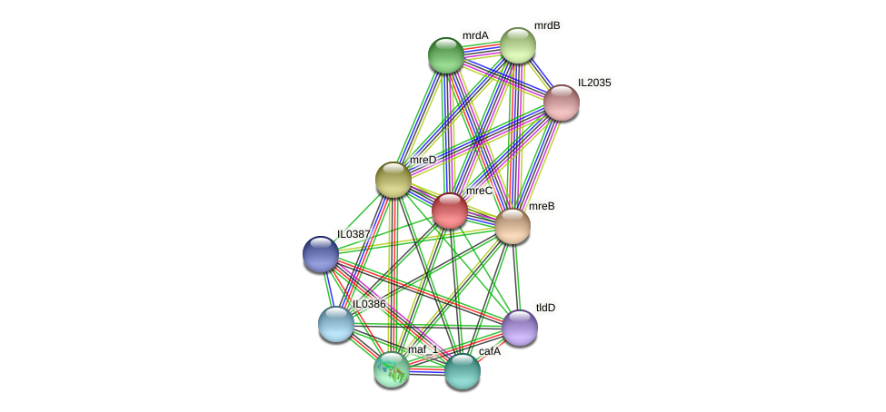 mreC protein (Idiomarina loihiensis) - STRING interaction network