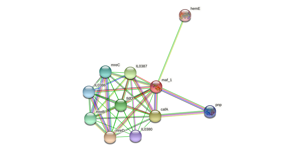 IL0384 protein (Idiomarina loihiensis) - STRING interaction network