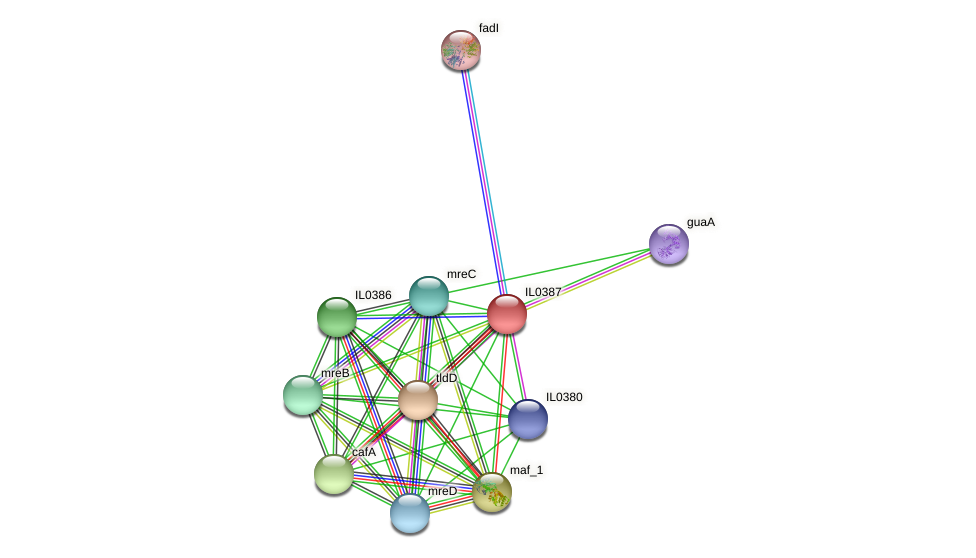 IL0387 protein (Idiomarina loihiensis) - STRING interaction network