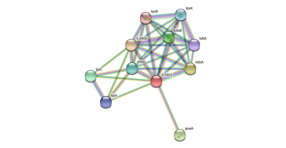 IL0401 protein (Idiomarina loihiensis) - STRING interaction network