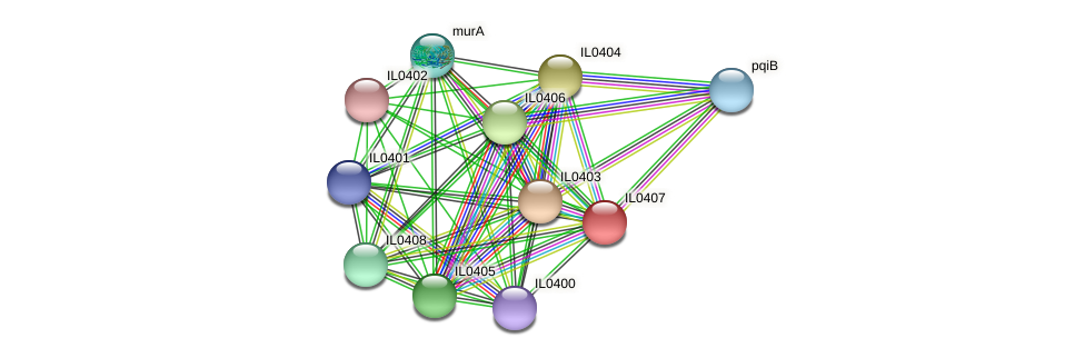 IL0407 protein (Idiomarina loihiensis) - STRING interaction network