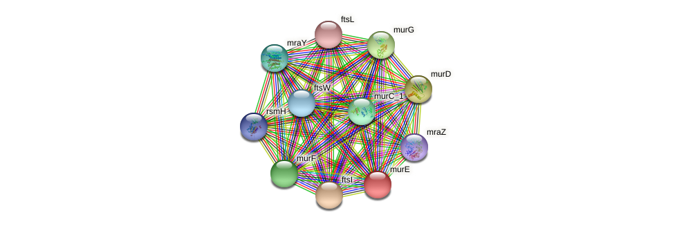 murE protein (Idiomarina loihiensis) - STRING interaction network