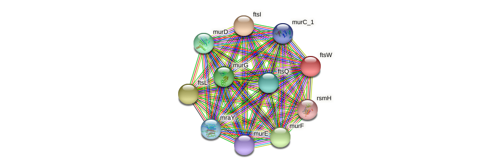 ftsW protein (Idiomarina loihiensis) - STRING interaction network
