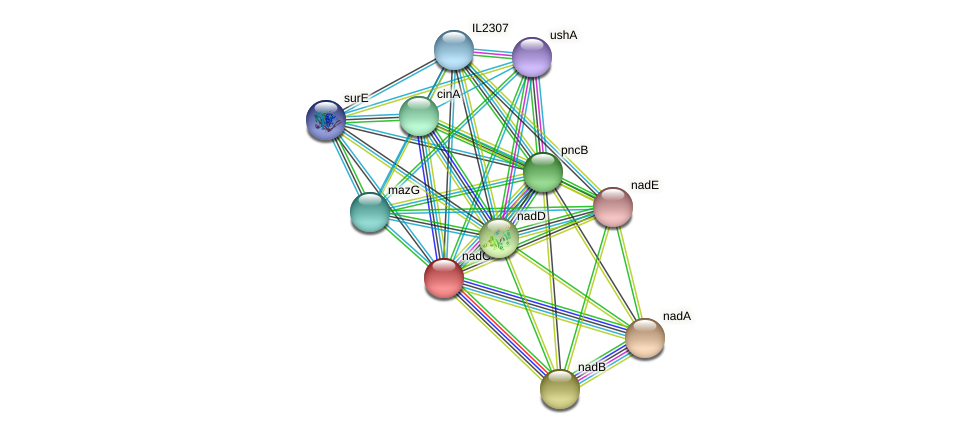 nadC protein (Idiomarina loihiensis) - STRING interaction network