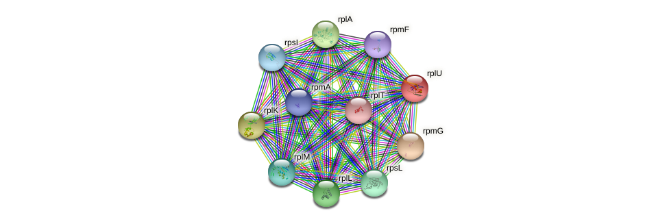 rplU protein (Idiomarina loihiensis) - STRING interaction network