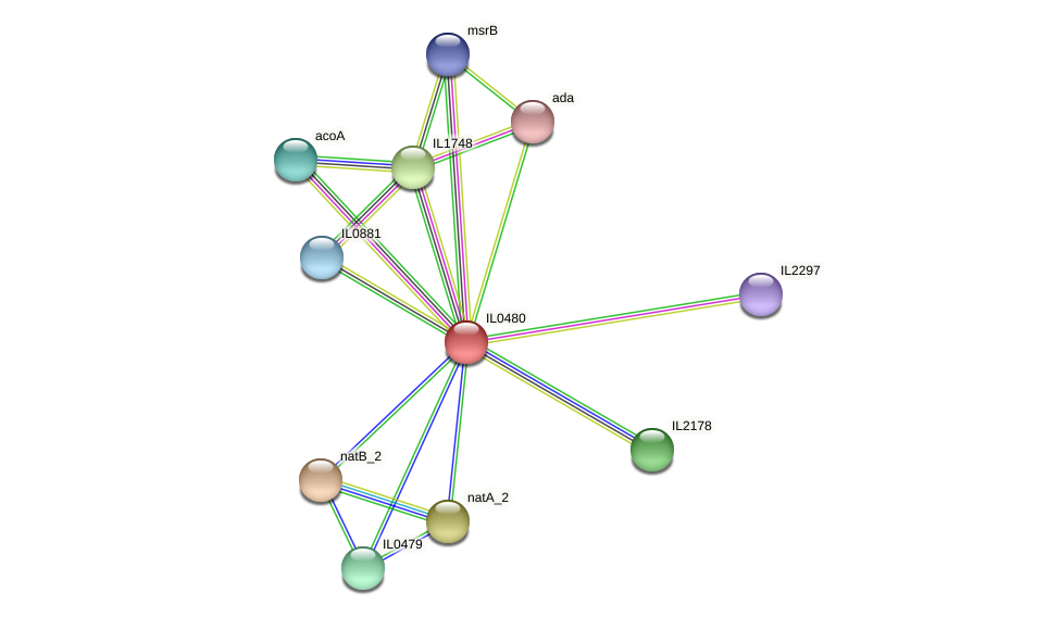 IL0480 protein (Idiomarina loihiensis) - STRING interaction network