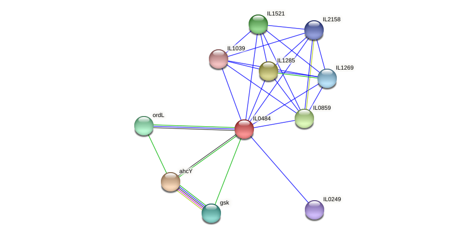 IL0484 protein (Idiomarina loihiensis) - STRING interaction network