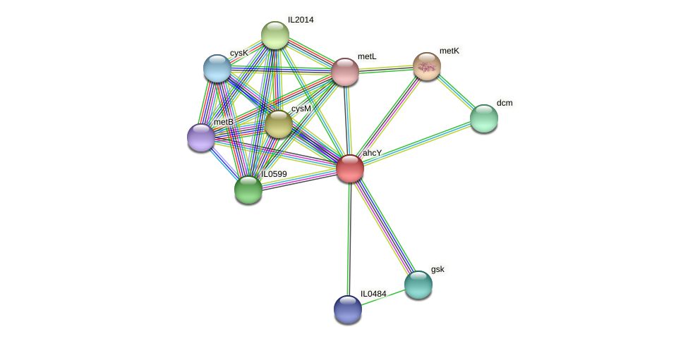 ahcY protein (Idiomarina loihiensis) - STRING interaction network