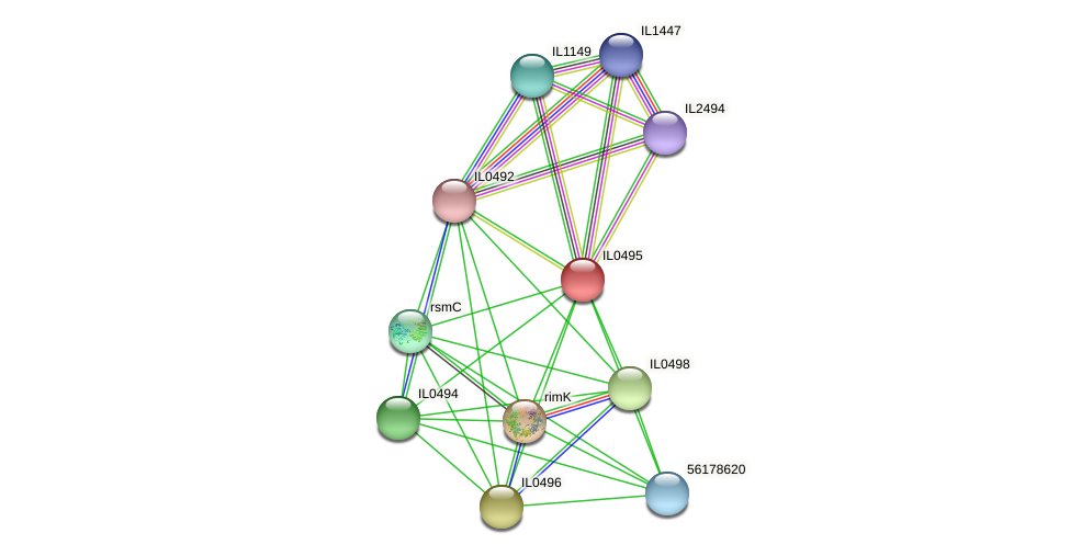IL0495 protein (Idiomarina loihiensis) - STRING interaction network